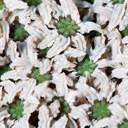 unbekannte Koralle 2