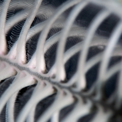 Supermacroaufnahme eines Federsternarms