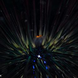 Urknall... Zentrum eines Seeigels