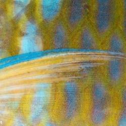 Papageienfisch Detail