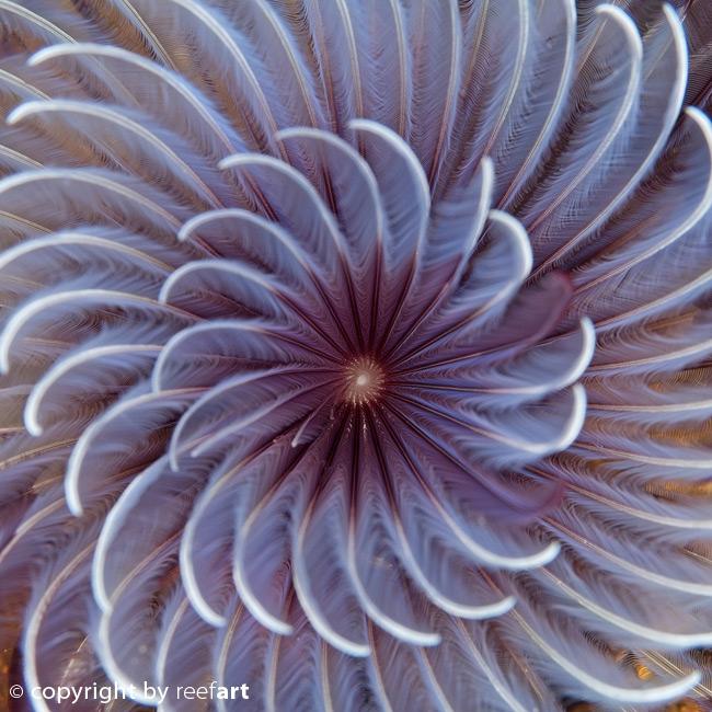 Röhrenwurm