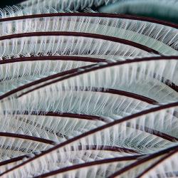 Federröhrenwurm